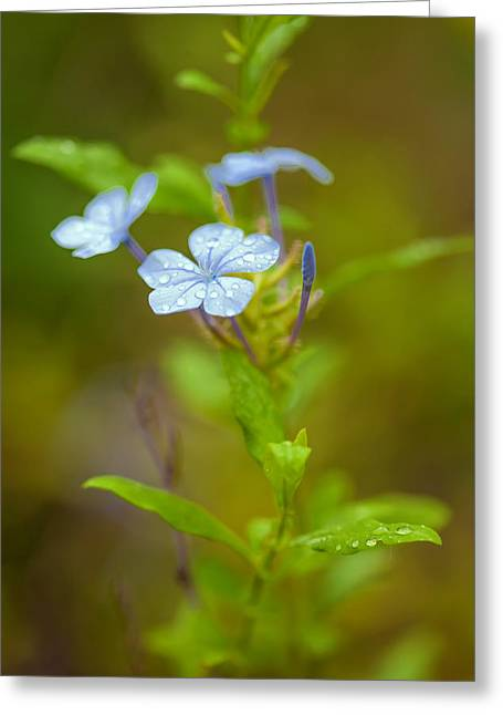 Raindrops On Petals Greeting Card by Az Jackson