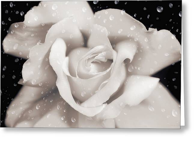 Greeting Card featuring the photograph Raindrops On Sepia Rose Flower by Jennie Marie Schell