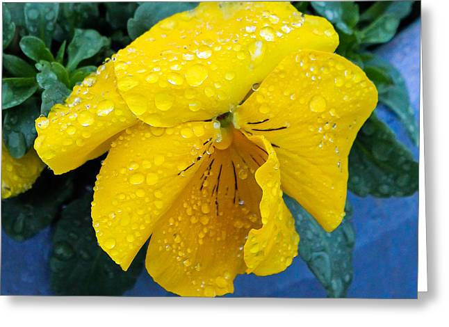 Greeting Card featuring the photograph Raindrops On Yellow Pansy by E Faithe Lester