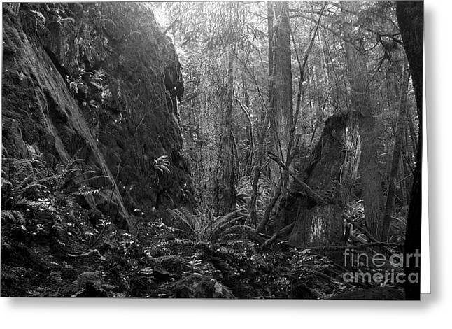 Greeting Card featuring the photograph Rainforest Black And White by Sharon Talson