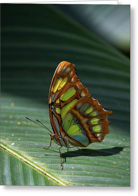 Rainforest Butterfly Greeting Card