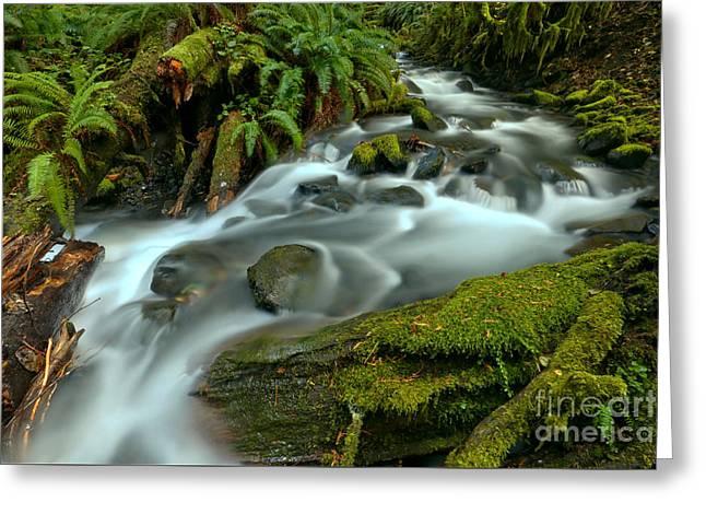 Rainforest Creek Greeting Card by Adam Jewell