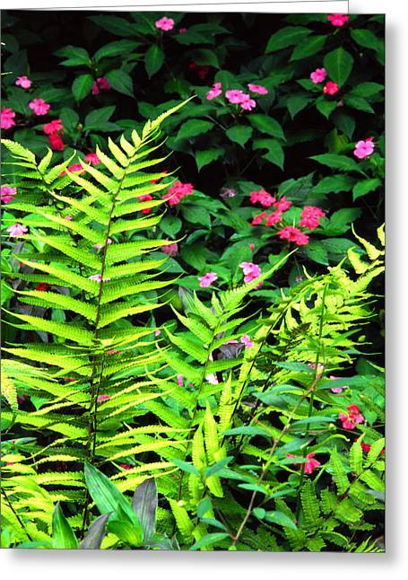 Puerto Rico Greeting Cards - Rainforest Ferns and Impatiens Greeting Card by Thomas R Fletcher