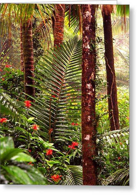 Yunque Greeting Cards - Rainforest Palms and Hibiscus Greeting Card by Thomas R Fletcher