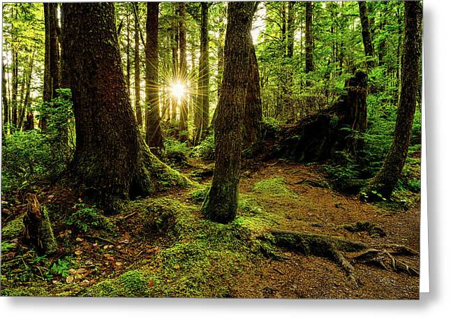 Rainforest Path Greeting Card by Chad Dutson
