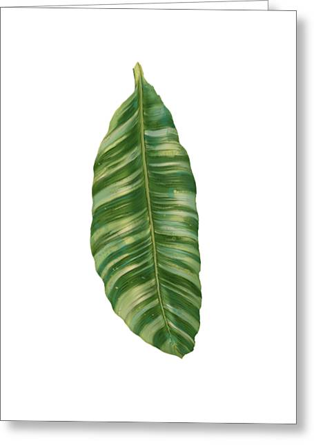 Rainforest Resort - Tropical Banana Leaf  Greeting Card by Audrey Jeanne Roberts