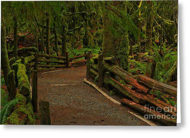 Rainforest Solitude Greeting Card by Adam Jewell