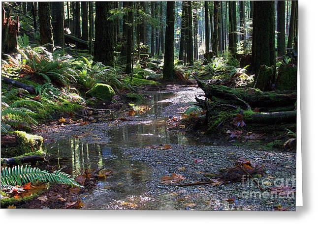Greeting Card featuring the photograph Rainforest Trail 2 by Sharon Talson