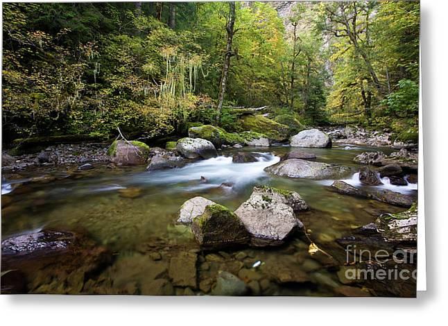 Rainier Fall Creek Greeting Card