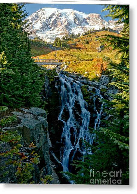 Rainier Myrtle Falls Greeting Card by Adam Jewell