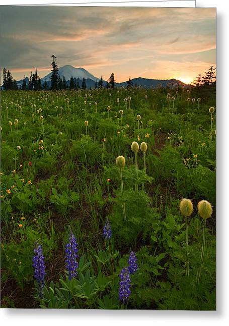 Rainier Wildflower Light Greeting Card