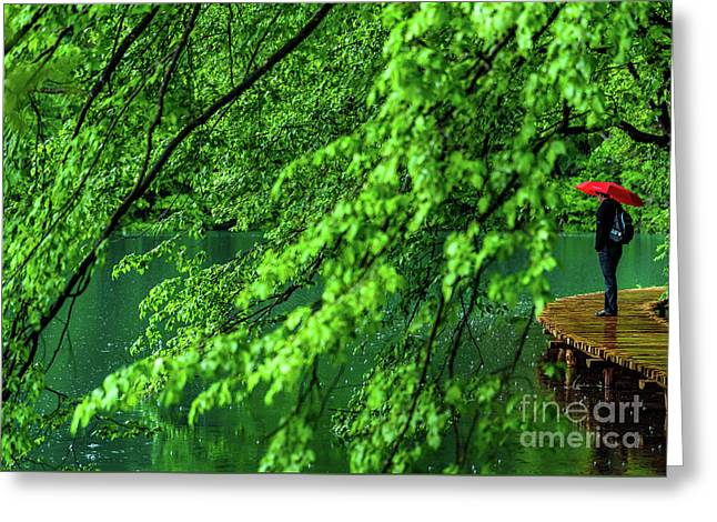 Raining Serenity - Plitvice Lakes National Park, Croatia Greeting Card