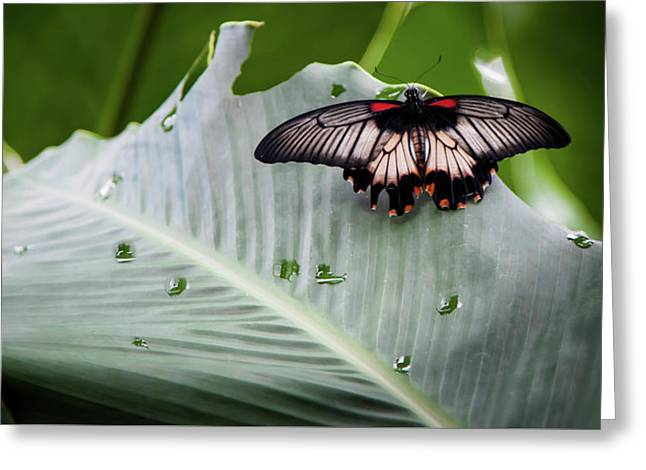 Greeting Card featuring the photograph Raining Wings by Karen Wiles