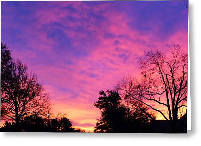 Raintree Sunrise Greeting Card by John Adams