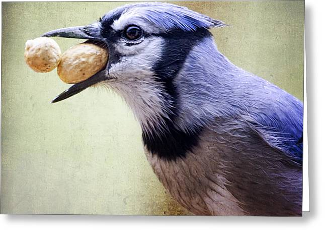 Rainy Day Blue Jay Greeting Card