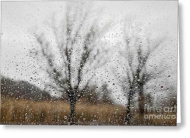 Rainy Day Greeting Card by Elena Elisseeva