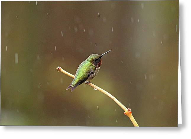 Rainy Day Hummingbird Greeting Card