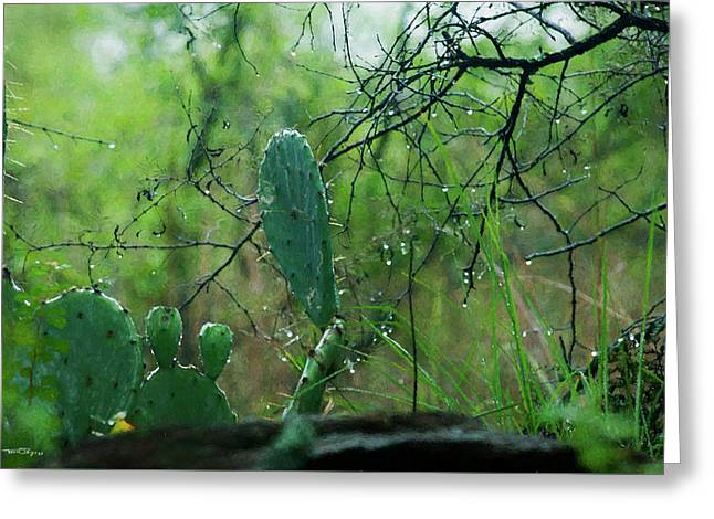 Rainy Day In Central Texas Greeting Card