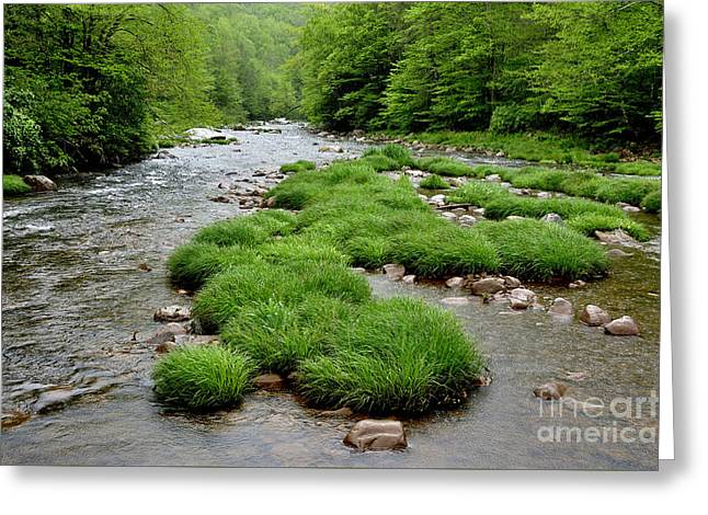 Rainy Day On Williams River  Greeting Card