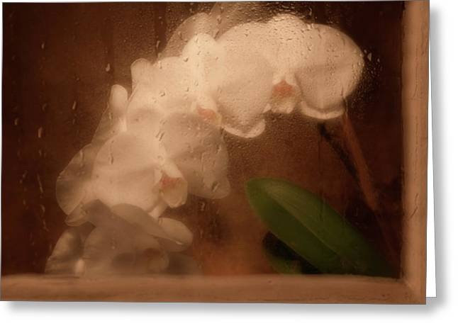 Rainy Day Orchid Greeting Card by Tom Mc Nemar