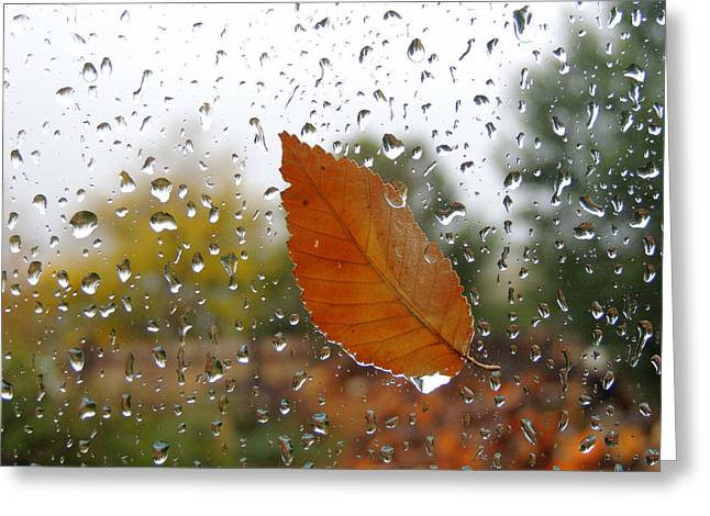 Rainy Day Visitor Greeting Card