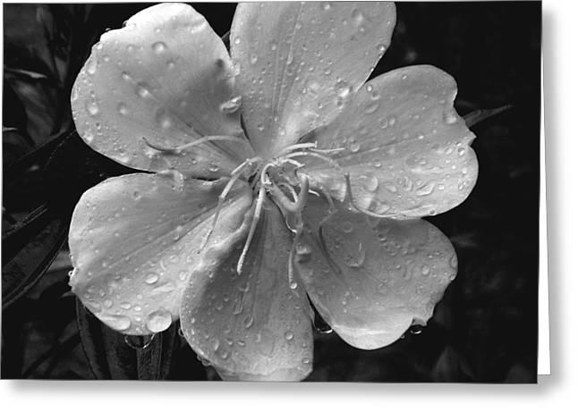 Rainy Days Greeting Card by Amarildo Correa