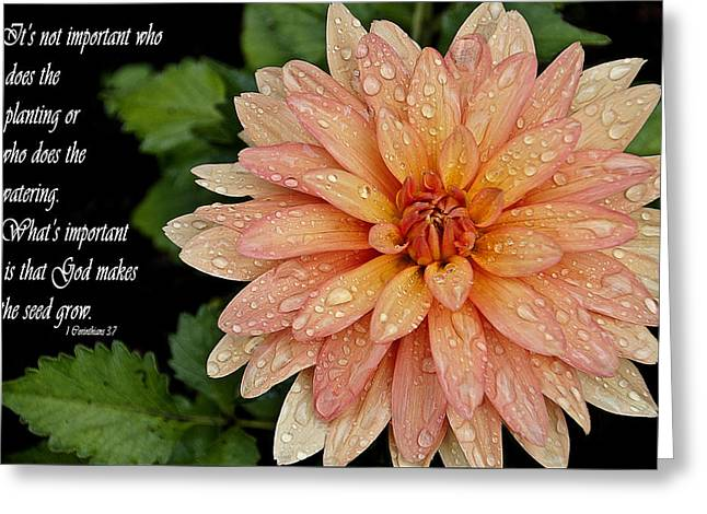 Rainy Days Greeting Card by Deborah Klubertanz