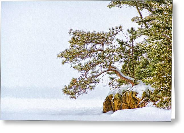 Rainy Lake Pine Greeting Card