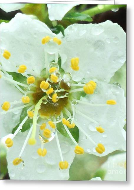 Rainy Plum Blossom Macro Greeting Card