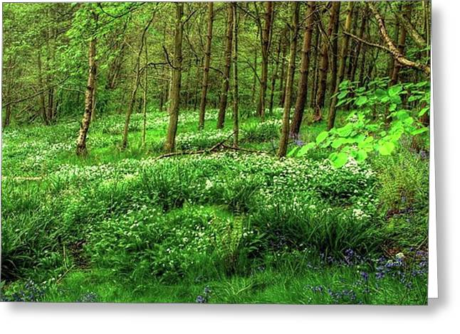 Ramsons And Bluebells, Bentley Woods Greeting Card