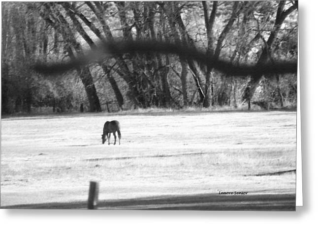 Ranch Horse In The Fields Greeting Card