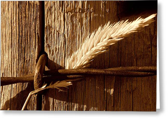 Ranch Greeting Cards - Ranch Life.. Greeting Card by Al  Swasey