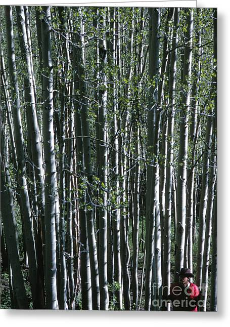 Rancher In A Birch Forest, 1969 Greeting Card