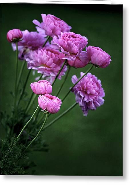 Ranunculus Greeting Card by James Steele