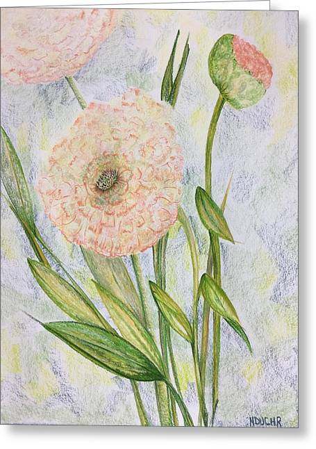 Greeting Card featuring the drawing Ranunculus by Norma Duch
