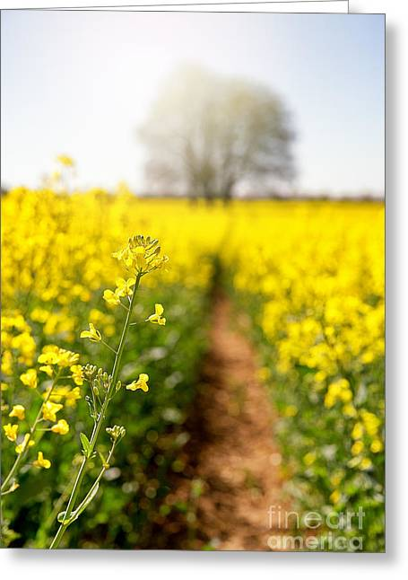 Rape Flower Selective Focus Greeting Card by Jane Rix