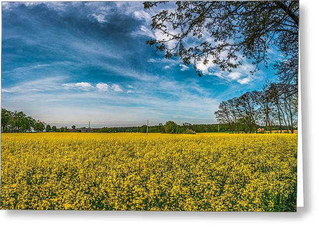 Greeting Card featuring the photograph Rapeseed Field by Dmytro Korol
