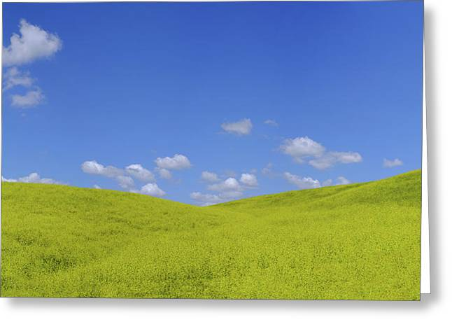 Rapeseed Landscape Greeting Card by Marius Sipa