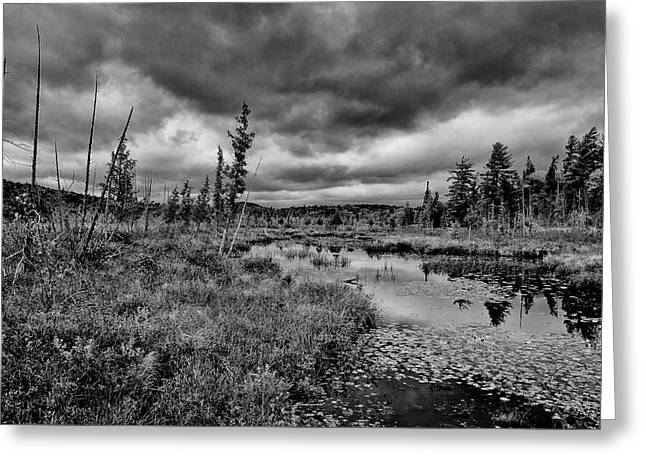 Greeting Card featuring the photograph Raquette Lake Bog by David Patterson