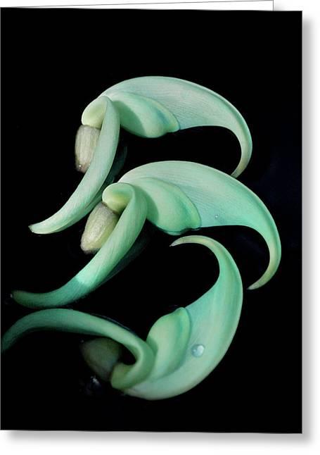 Rare Orchid Petals Greeting Card