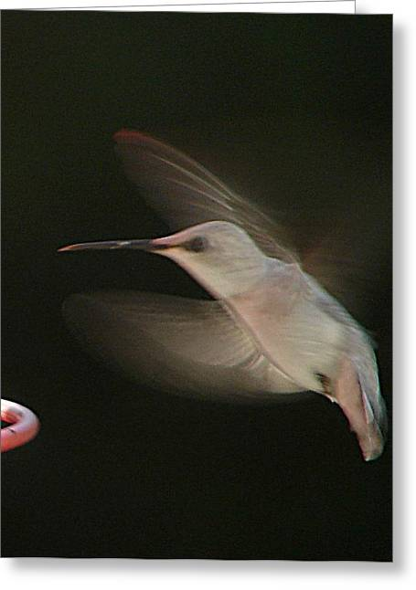 Greeting Card featuring the photograph Rare White Hummer In Flight by Rick Friedle