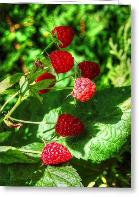 Raspberries Greeting Card