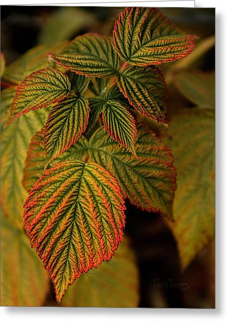 Raspberry Leaves Greeting Card