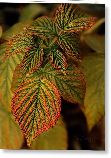 Raspberry Leaves Greeting Card