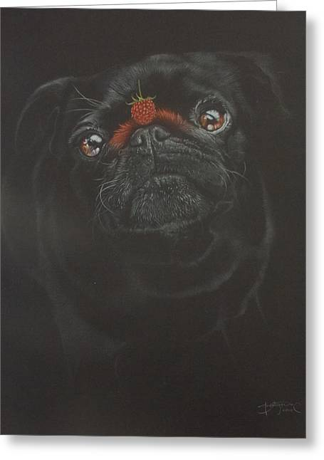 Raspberry Pug Greeting Card by Bernardo Castaneda