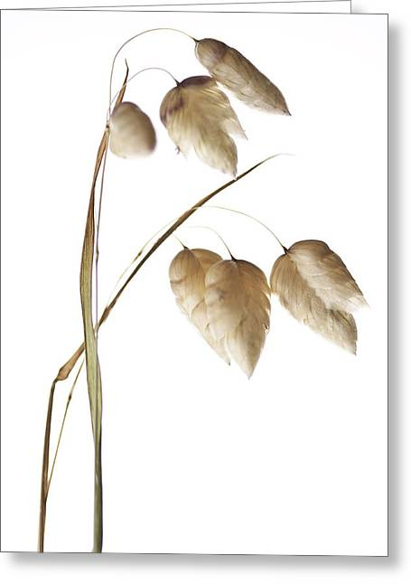Rattlesnake Grass Number 1 Greeting Card