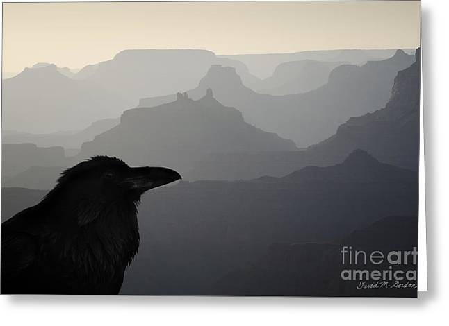 Raven And Grand Canyon Greeting Card by Dave Gordon