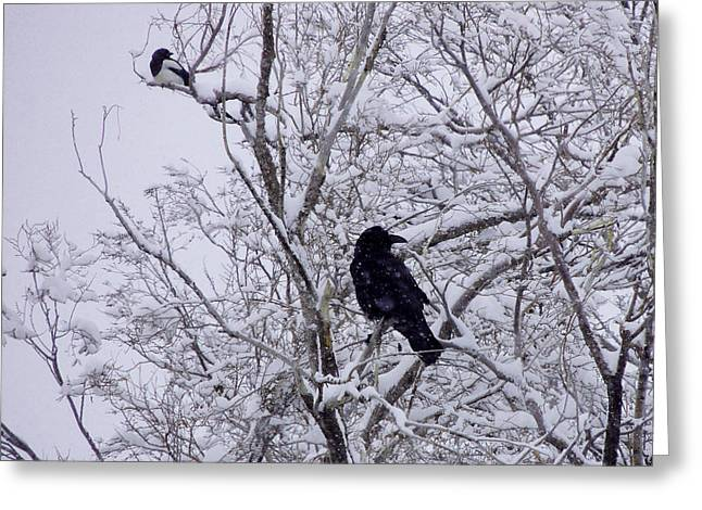 Raven And Magpie Greeting Card