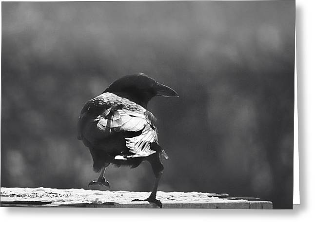Greeting Card featuring the photograph Raven In The Sun by Susan Capuano