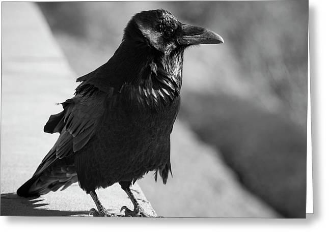 Raven Iv Bw Greeting Card